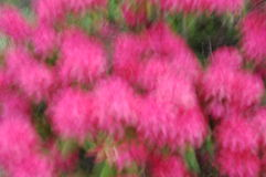 Abstract onduidelijk beeld van kleurrijke bloemenachtergrond Stock Foto