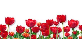 Abstract ontwerp van brede bloemengrens Royalty-vrije Stock Afbeeldingen