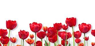 Abstract ontwerp van brede bloemengrens Stock Foto's