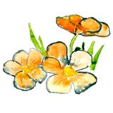 Abstract orange grass floral watercolor flower Stock Image