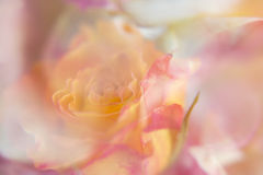 Abstract orange and red rose Royalty Free Stock Images