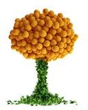 Abstract orange tree. Isolated on white Royalty Free Stock Photo