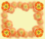 Abstract oranje kader Stock Fotografie