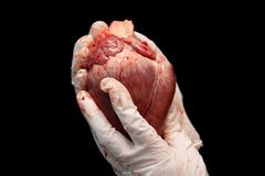Abstract organ transplantation. A human heart in woman`s hand. Saving lives hopelessly sick. Complex surgical operations. Interna stock photos