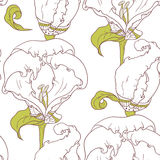 Abstract outline floral seamless pattern with hand drawn flowers Stock Photography