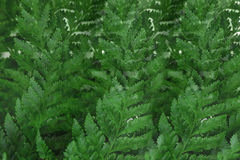 Abstract overlay background of green fern leaf Stock Photo