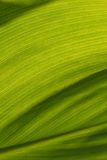 Abstract painted background banana leaf Stock Photo