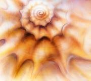 Abstract painting sea shell, mixed media art background with cir. Abstract painting sea shell, mixed media art background with light circle bokeh Stock Photo