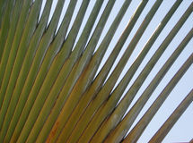 Abstract palm. Detail of a traveller's palm leave stock photo