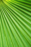 Abstract Palm Fan Royalty Free Stock Photos