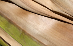 Abstract Palm Frond Leaf Texture Stock Images