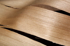 Abstract Palm Frond Wood Texture Royalty Free Stock Photography
