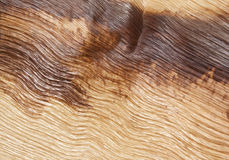 Abstract Palm Frond Wood Texture Stock Image