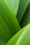 Abstract palm leafs. An abstract image of palm leafs Stock Photos