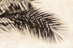 Abstract Palm Leave Shadow. Shadow of Palm Leaves on Beige Wall Stock Photos