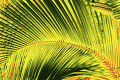 Abstract palmetto leaves in dramatic false colors from Florida. Royalty Free Stock Images