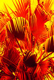 Abstract palmetto leaves in dramatic false colors from Florida. Stock Image