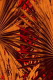 Abstract palmetto leaves in dramatic false colors from Florida. Stock Photography