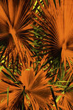 Abstract palmetto leaves in dramatic false colors from Florida. Stock Images