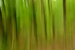 Abstract panning view of forest Stock Images