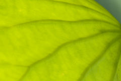 Abstract part of leaf Royalty Free Stock Images
