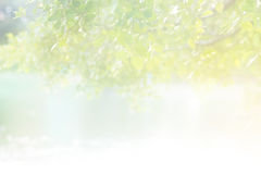 Abstract pastel color soft light morning sunshine on the leaf in lake Stock Photography