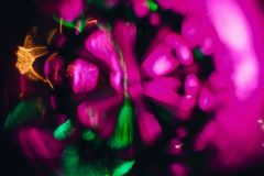 Abstract patroon en heldere roze purpere en groene gloed in een cirkelvorm Stock Fotografie