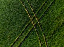 Abstract patroon in groen gewas, luchtmening Royalty-vrije Stock Afbeelding