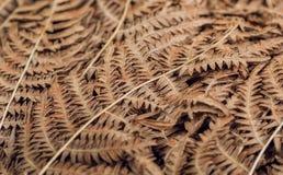Abstract patroon van autemn droge bladeren Achtergrond van het oude blad van de varenstruik in bos Stock Foto's