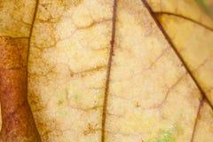 Abstract patroon van de herfstblad Stock Afbeeldingen