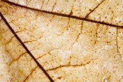 Abstract patroon van kleurrijk bruin de herfstblad Stock Fotografie