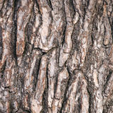 Abstract pattern of bark on old pine tree Stock Photography