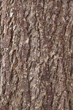 Abstract pattern of bark of older spruce tree Stock Image