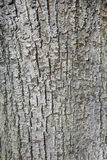 Abstract pattern of bark on tilia cordata or little leaved linde Stock Photo
