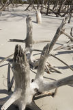 Abstract pattern of bleached driftwood on the beach in Florida. Royalty Free Stock Photography