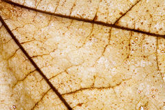 Abstract pattern of colorful brown autumn leaf Stock Photography