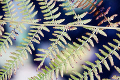 Abstract pattern fern leaves. Close-up Stock Photography