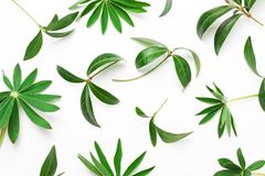 Abstract pattern of green leaves, plants on a white background. Minimalistic natural concept. View from above, flat royalty free stock photography