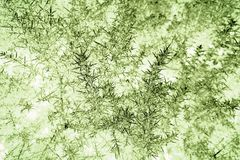ABSTRACT PATTERN. GREEN AND WHITE ABSTRACT PATTERN CREATED FROM GORSE TWIGS Royalty Free Stock Photo