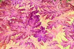 Abstract mauve, pink and purple leaf pattern. Abstract leaf pattern in purple. pink and mauve hues royalty free stock photography