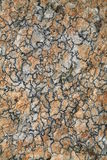 Abstract pattern of lichen Stock Photo