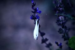 White butterfly on meadow flowers in a moonlight Stock Images