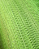 Abstract pattern of palm bark Stock Photo