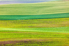 Abstract pattern of rolling fields Royalty Free Stock Photo