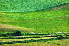 Abstract pattern of rolling fields Royalty Free Stock Images