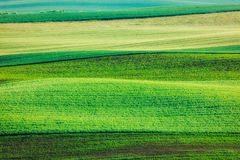 Abstract pattern of rolling fields Stock Images