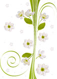 Abstract pattern with sakura flowers Stock Photo