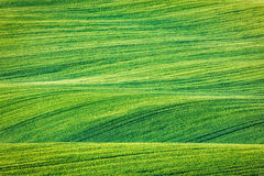 Free Abstract Pattern Texture Of Rolling Fields Royalty Free Stock Images - 55744359