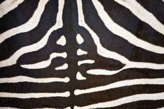 Abstract pattern on a zebra hide Royalty Free Stock Images