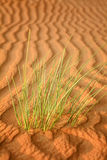 Abstract patterns in the dunes of Arabian desert Stock Photos